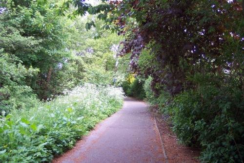 leafy cycle path